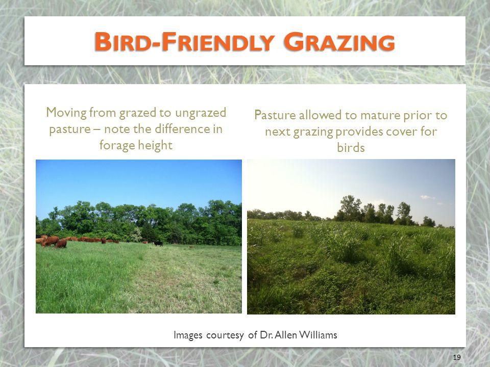 Bird-Friendly Grazing