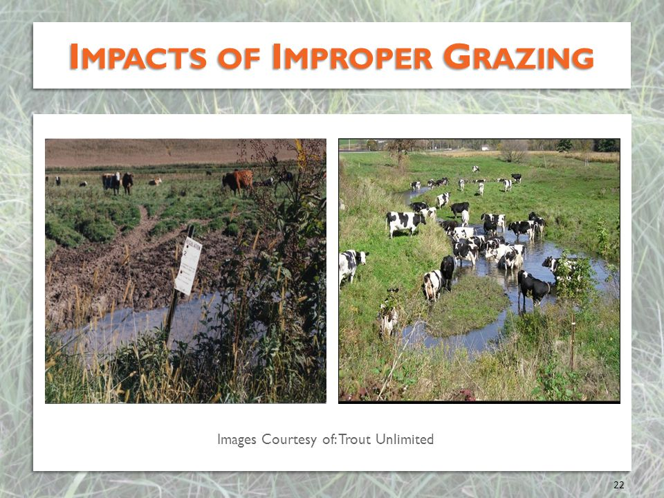 Impacts of Improper Grazing