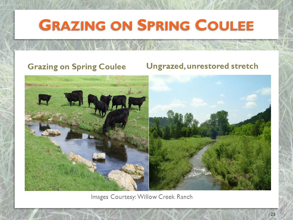 Grazing on Spring Coulee