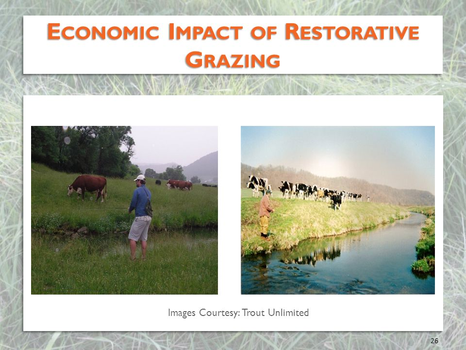 Economic Impact of Restorative Grazing