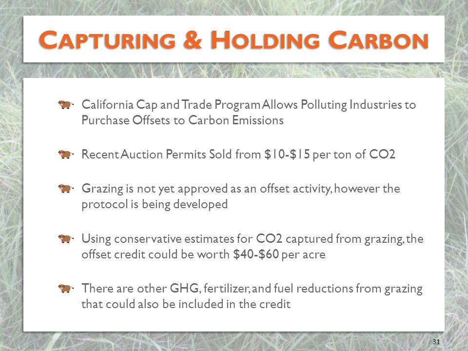 Capturing & Holding Carbon