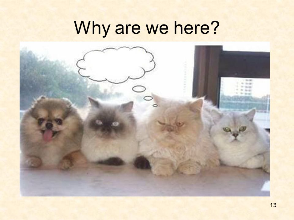 Why are we here Click….