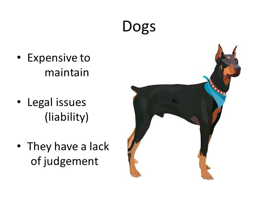 Dogs Expensive to maintain Legal issues (liability) They have a lack