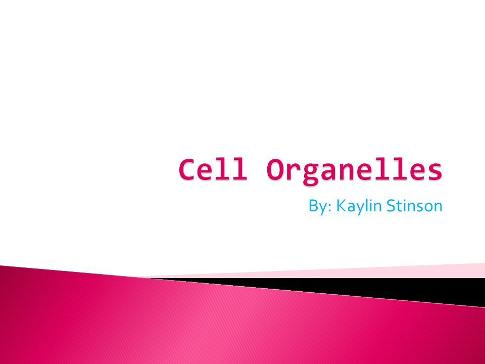 Cell Organelles By: Kaylin Stinson