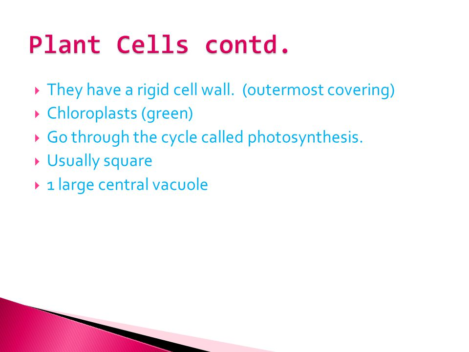 Plant Cells contd. They have a rigid cell wall. (outermost covering)