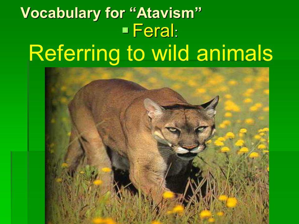 Vocabulary for Atavism