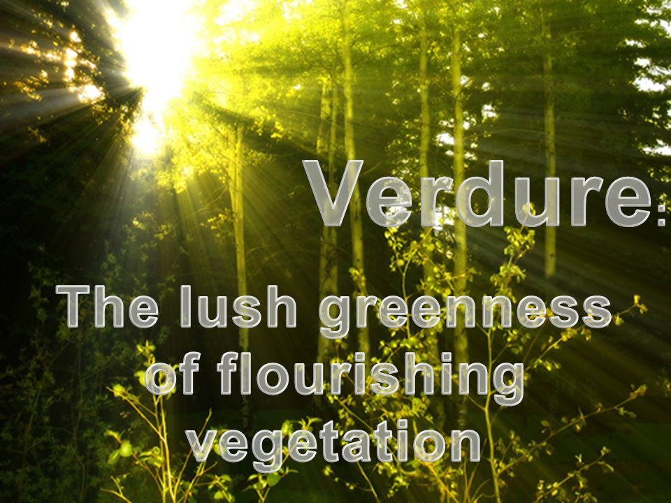 The lush greenness of flourishing vegetation