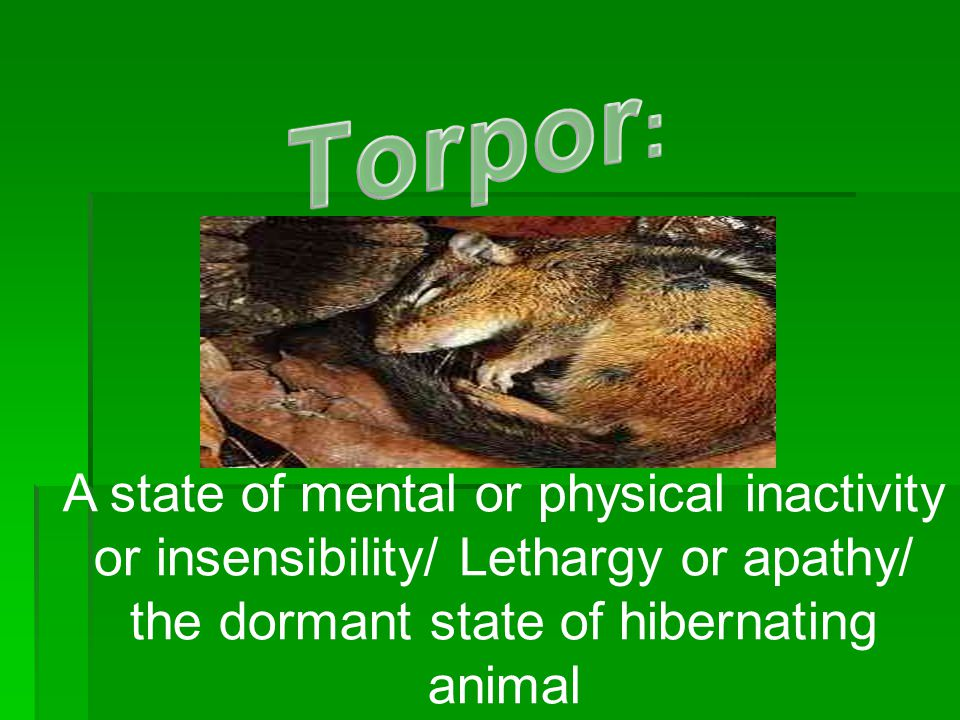 Torpor: A state of mental or physical inactivity or insensibility/ Lethargy or apathy/ the dormant state of hibernating animal.