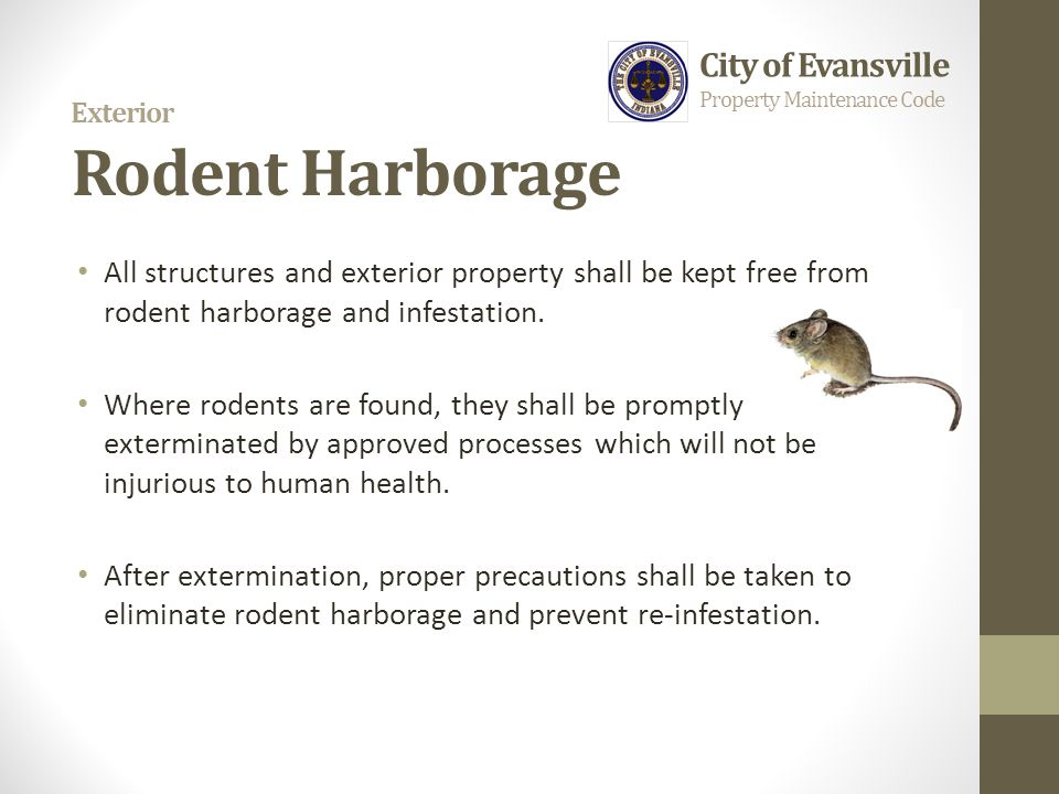 Exterior Rodent Harborage