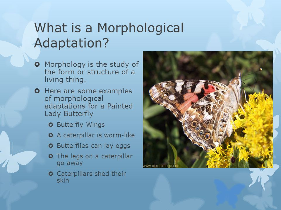 What is a Morphological Adaptation