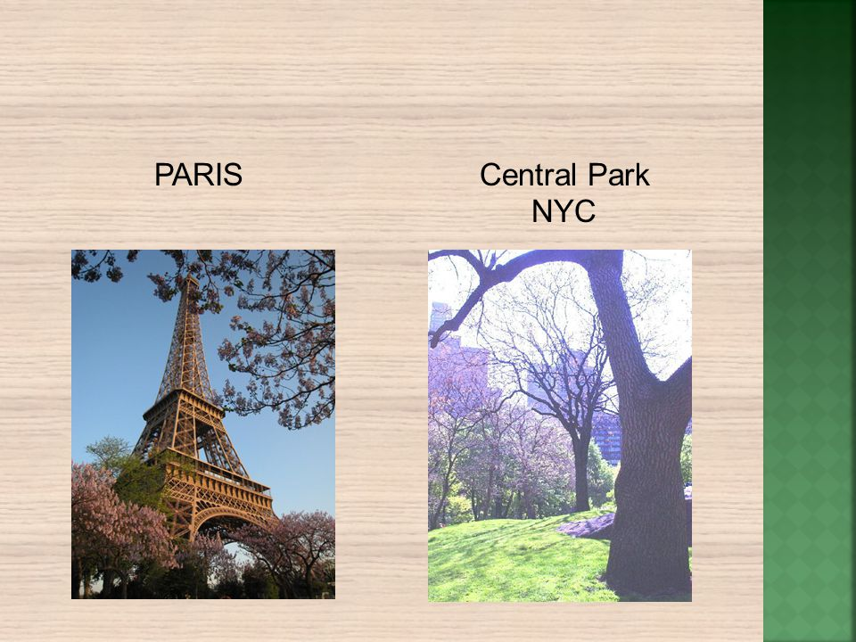 PARIS Central Park NYC