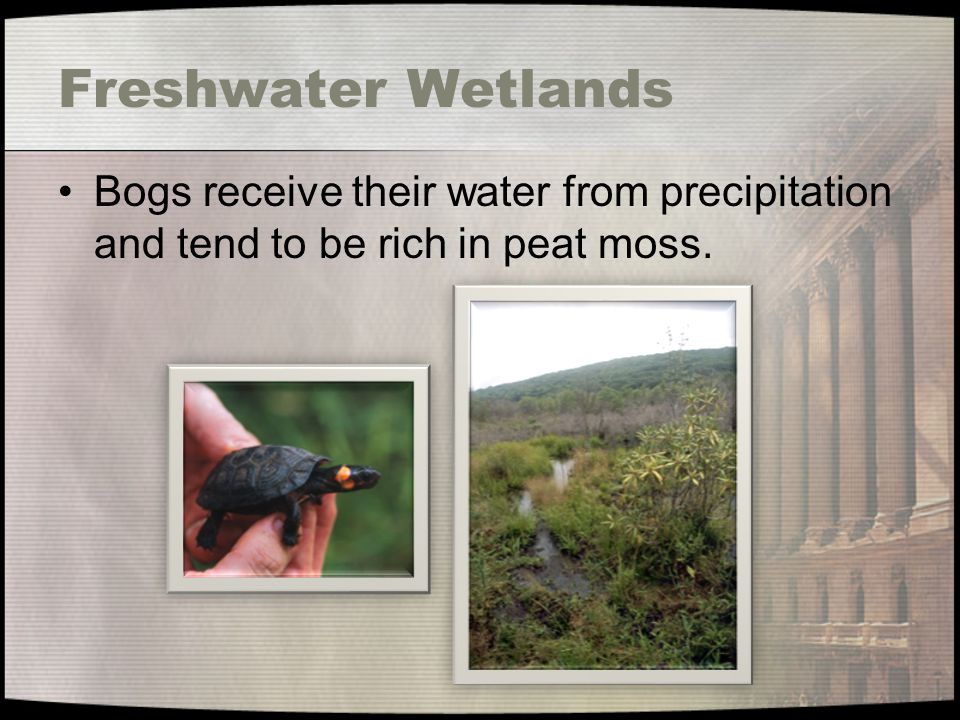 Freshwater Wetlands Bogs receive their water from precipitation and tend to be rich in peat moss.