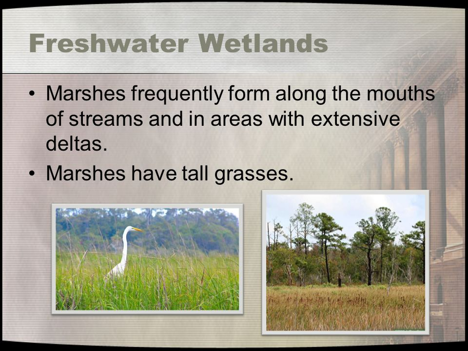 Freshwater Wetlands Marshes frequently form along the mouths of streams and in areas with extensive deltas.