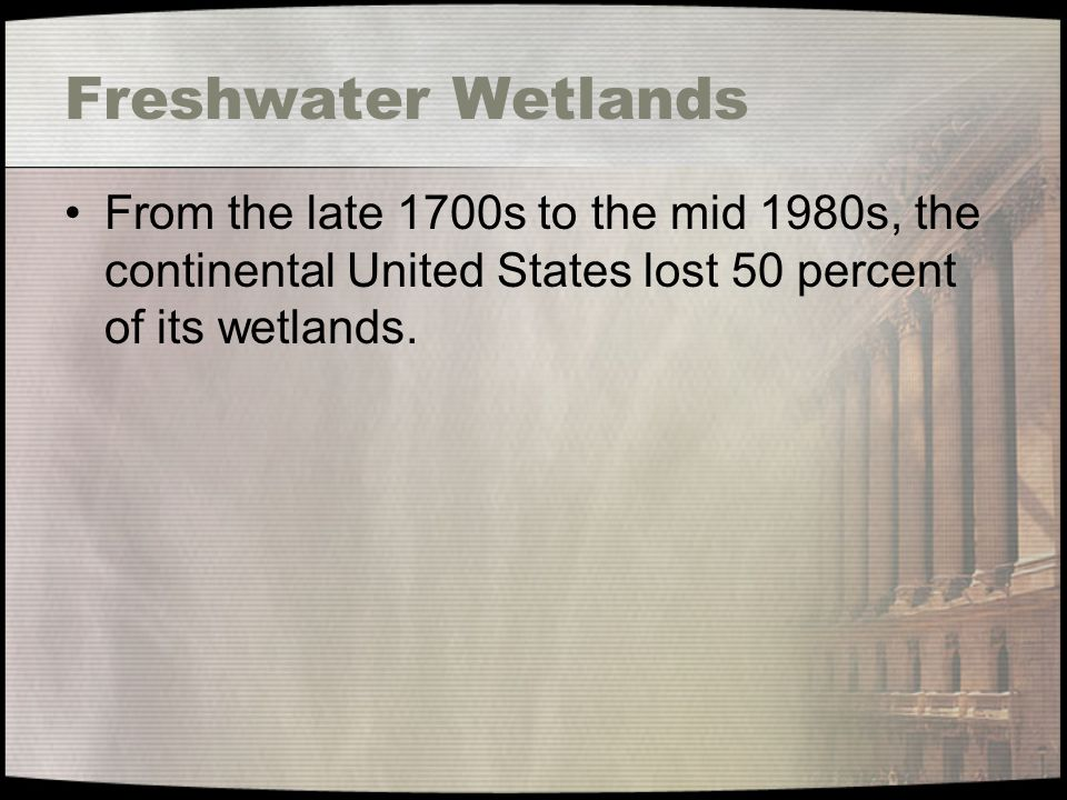 Freshwater Wetlands From the late 1700s to the mid 1980s, the continental United States lost 50 percent of its wetlands.