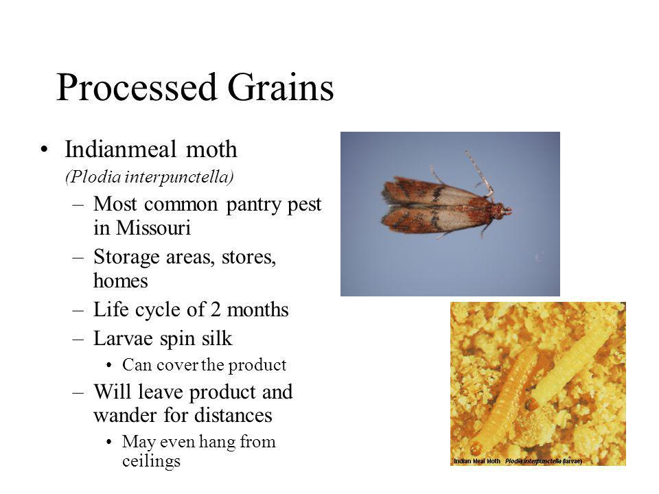Processed Grains Indianmeal moth Most common pantry pest in Missouri