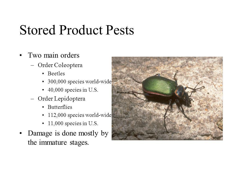 Stored Product Pests Two main orders