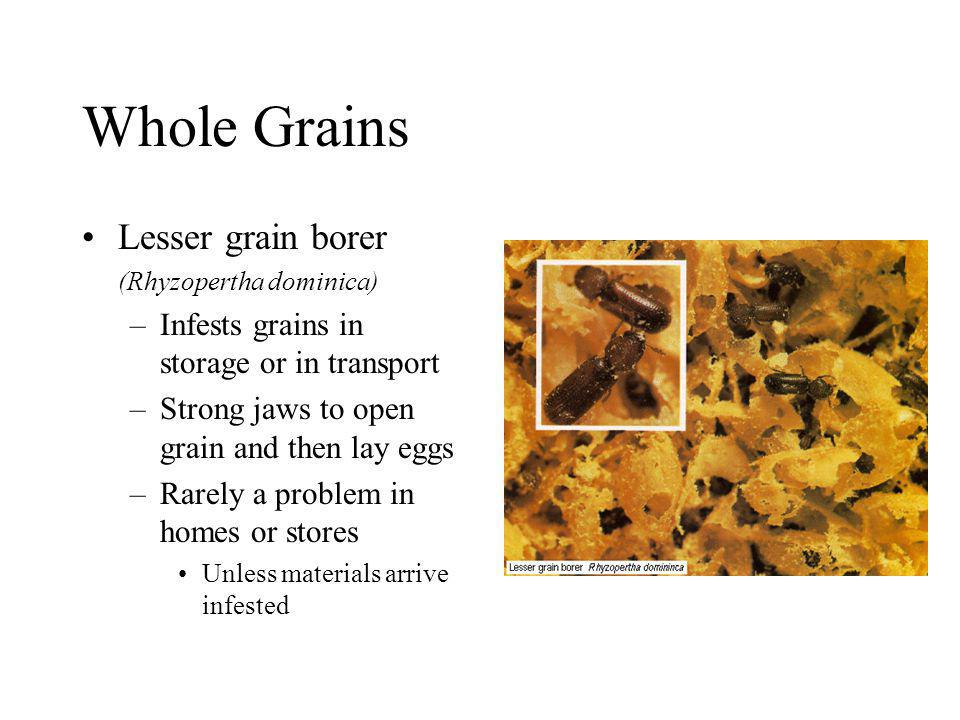 Whole Grains Lesser grain borer