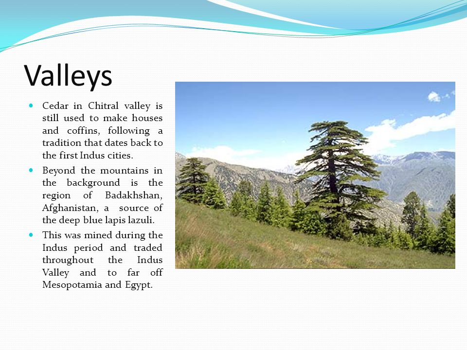 Valleys Cedar in Chitral valley is still used to make houses and coffins, following a tradition that dates back to the first Indus cities.