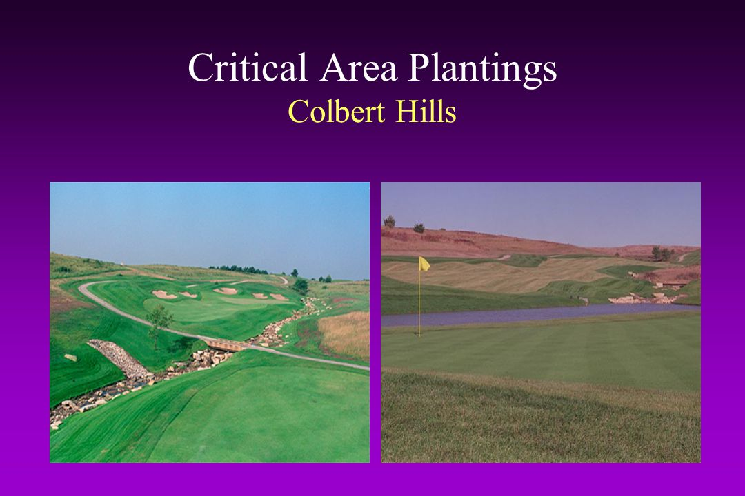 Critical Area Plantings Colbert Hills