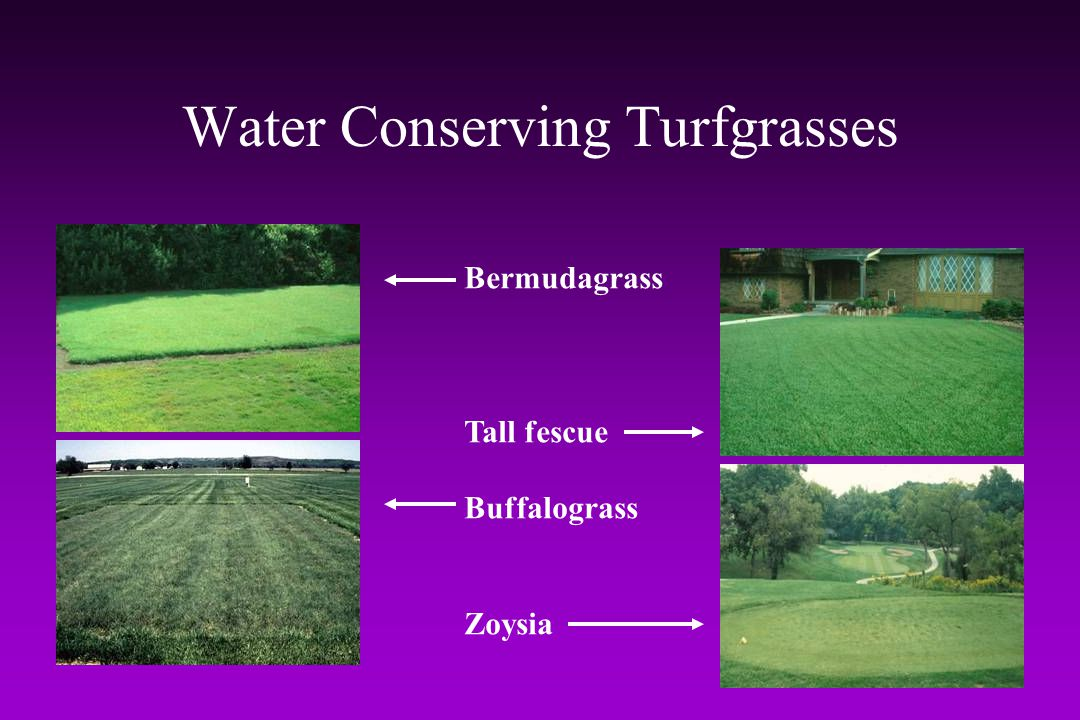 Water Conserving Turfgrasses