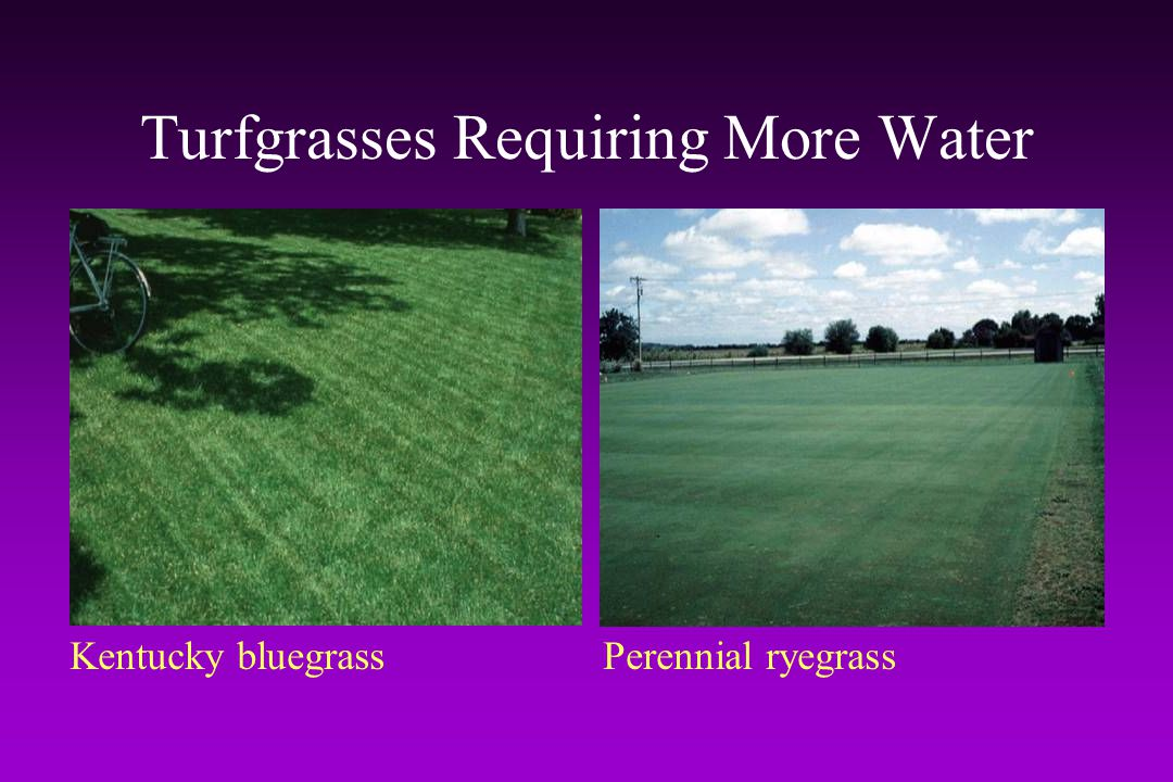 Turfgrasses Requiring More Water