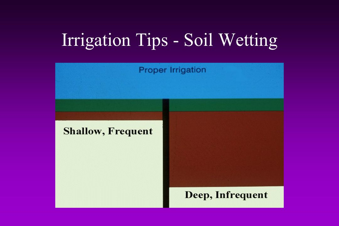 Irrigation Tips - Soil Wetting