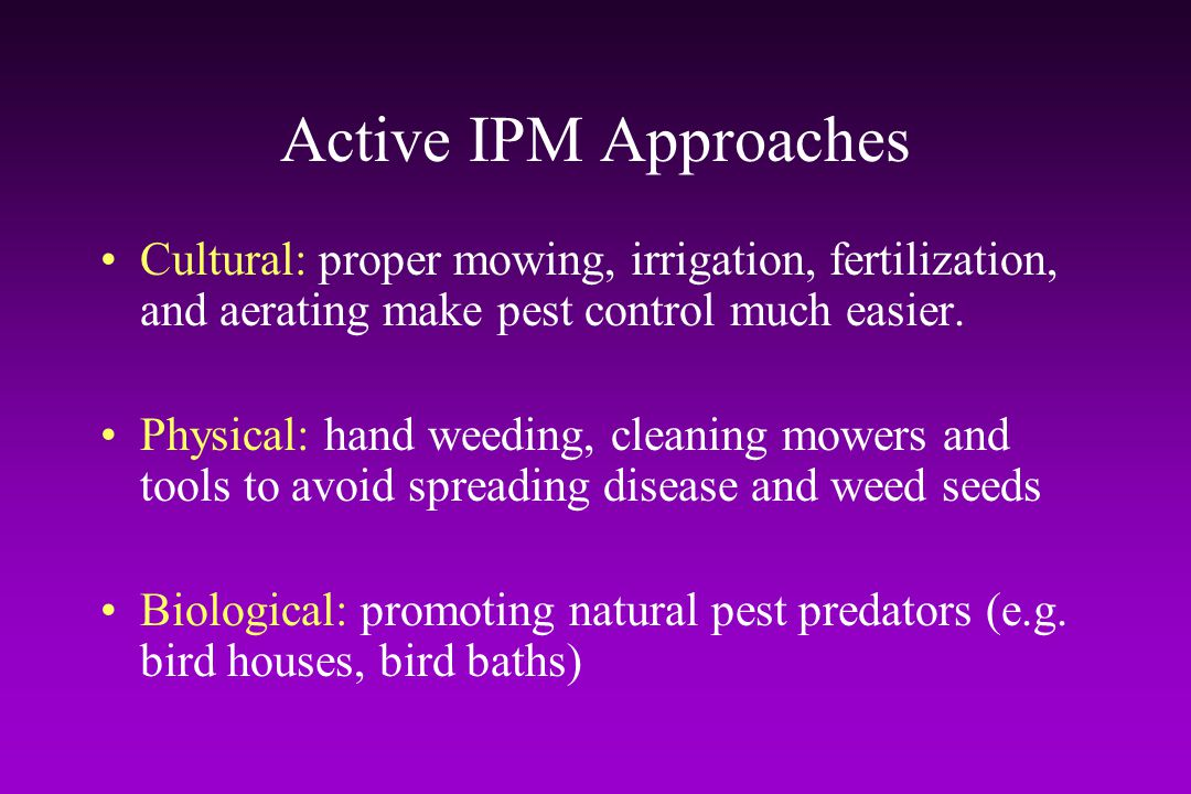 Active IPM Approaches Cultural: proper mowing, irrigation, fertilization, and aerating make pest control much easier.
