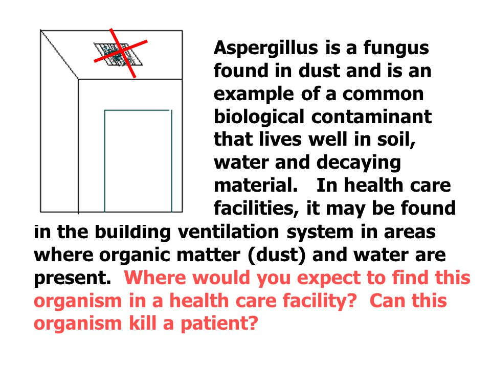 Aspergillus is a fungus found in dust and is an example of a common biological contaminant that lives well in soil, water and decaying material. In health care facilities, it may be found