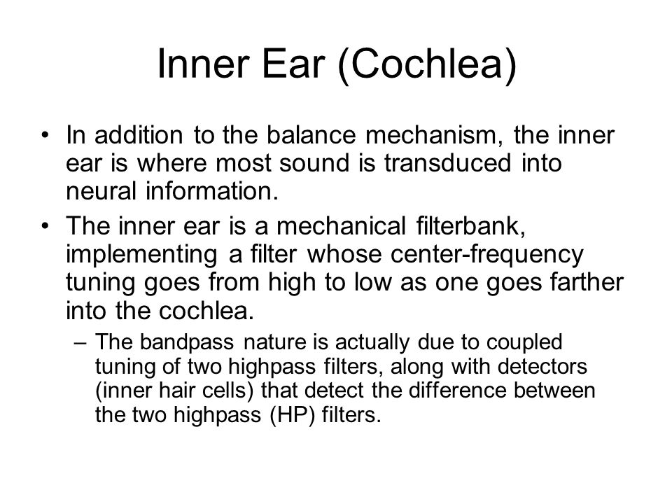 Inner Ear (Cochlea) In addition to the balance mechanism, the inner ear is where most sound is transduced into neural information.