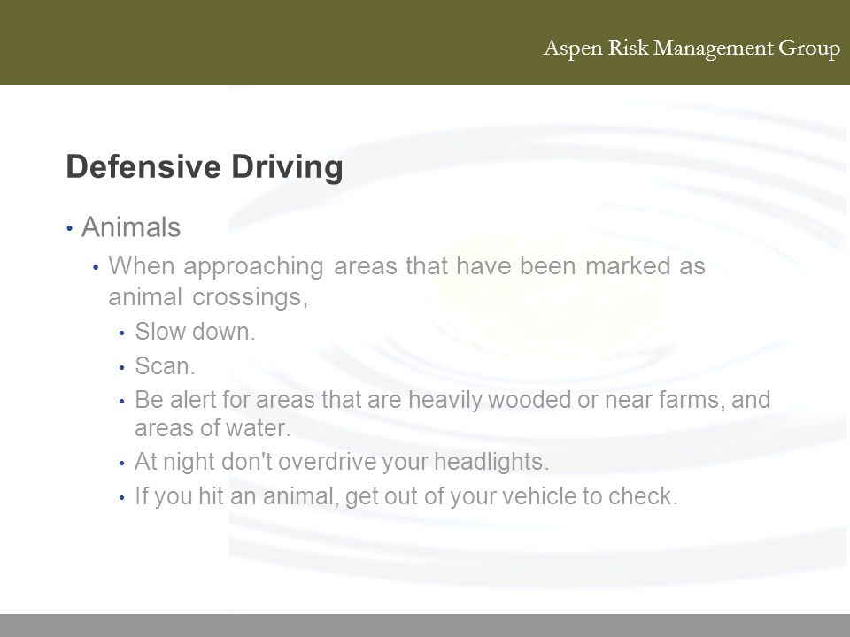 Defensive Driving Animals