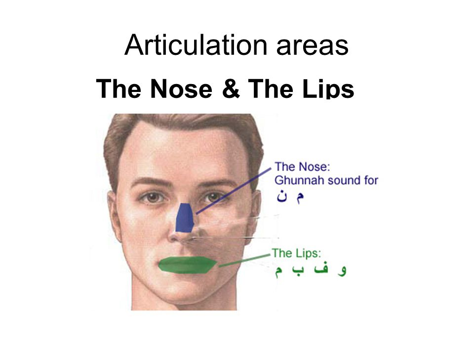 Articulation areas The Nose & The Lips