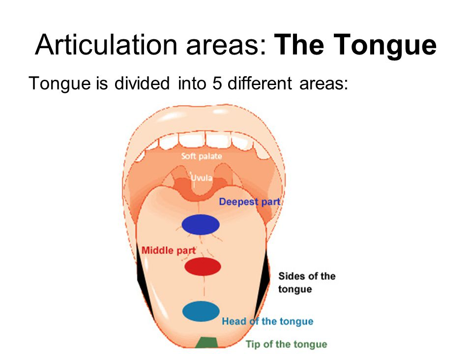 Articulation areas: The Tongue