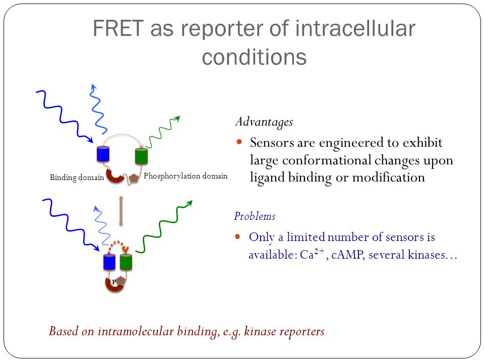 FRET as reporter of intracellular conditions