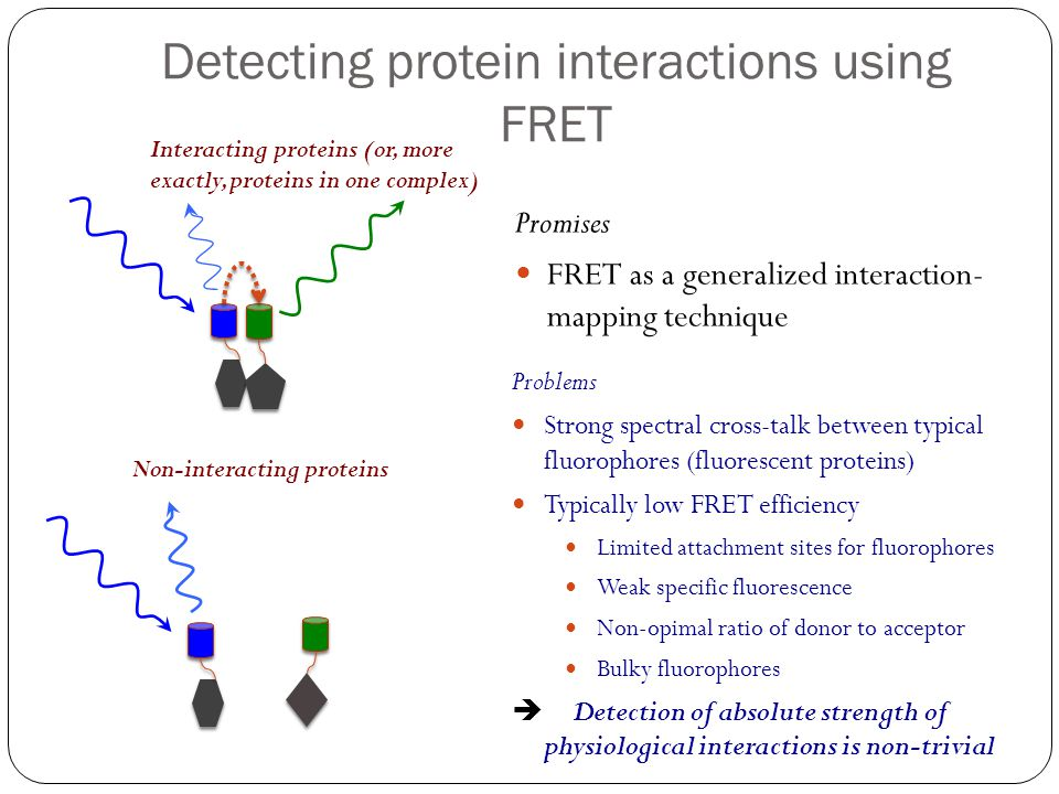 Detecting protein interactions using FRET