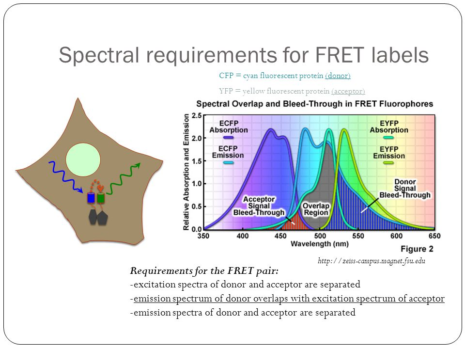Spectral requirements for FRET labels