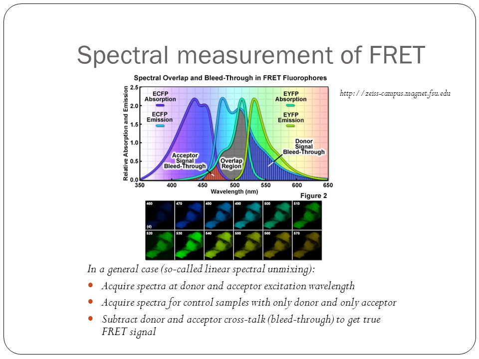 Spectral measurement of FRET