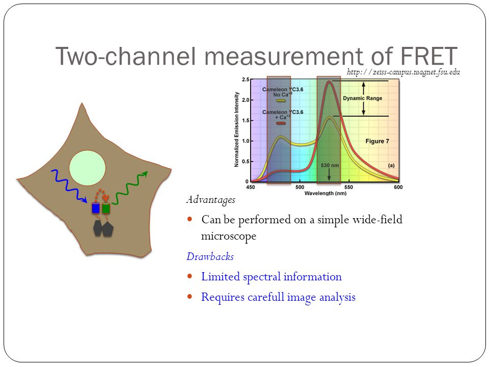 Two-channel measurement of FRET