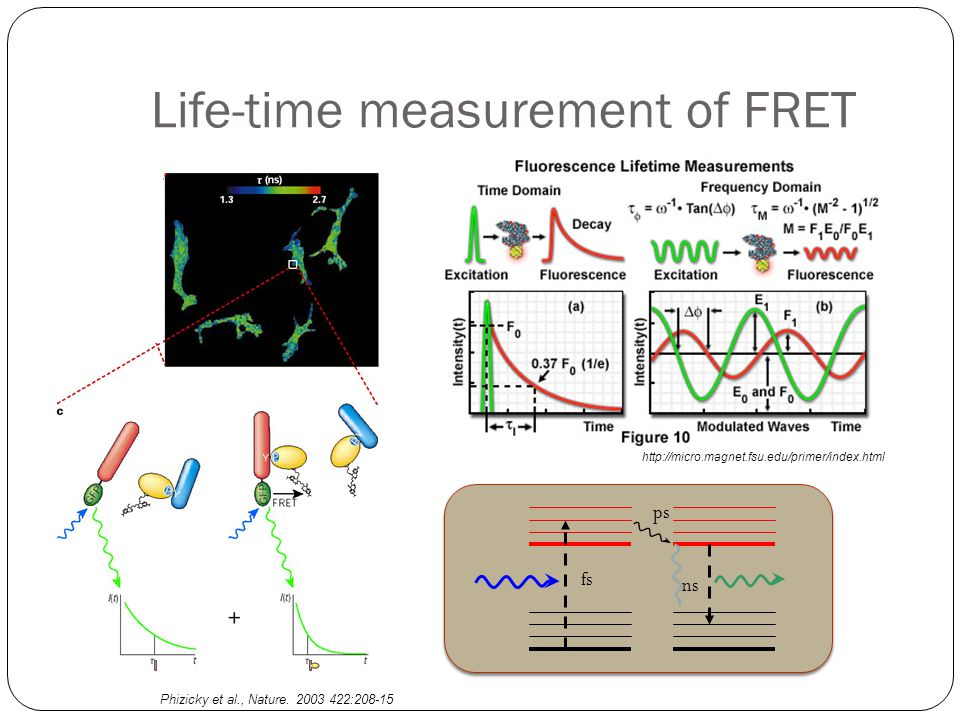 Life-time measurement of FRET