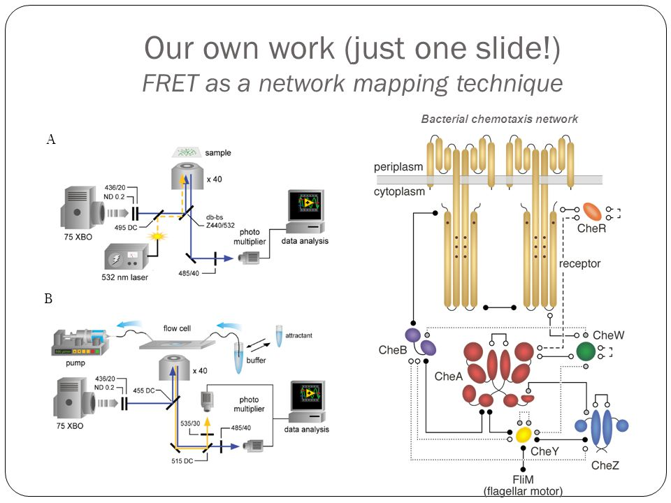 Our own work (just one slide!) FRET as a network mapping technique