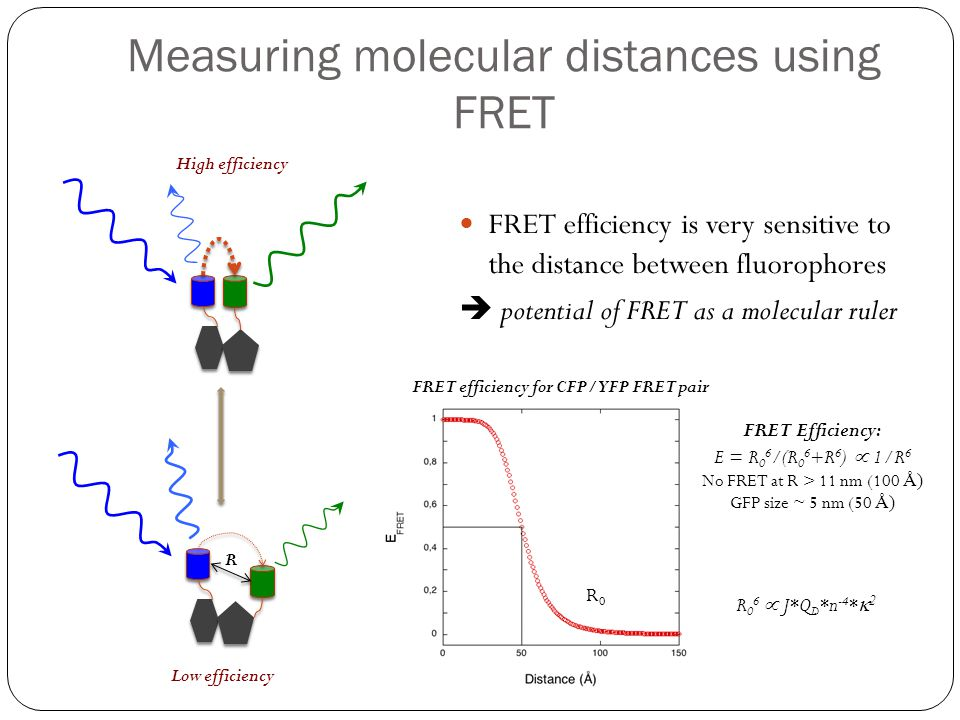 Measuring molecular distances using FRET