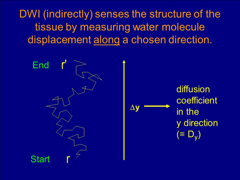 DWI (indirectly) senses the structure of the tissue by measuring water molecule displacement along a chosen direction.