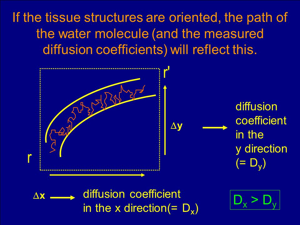 If the tissue structures are oriented, the path of the water molecule (and the measured diffusion coefficients) will reflect this.