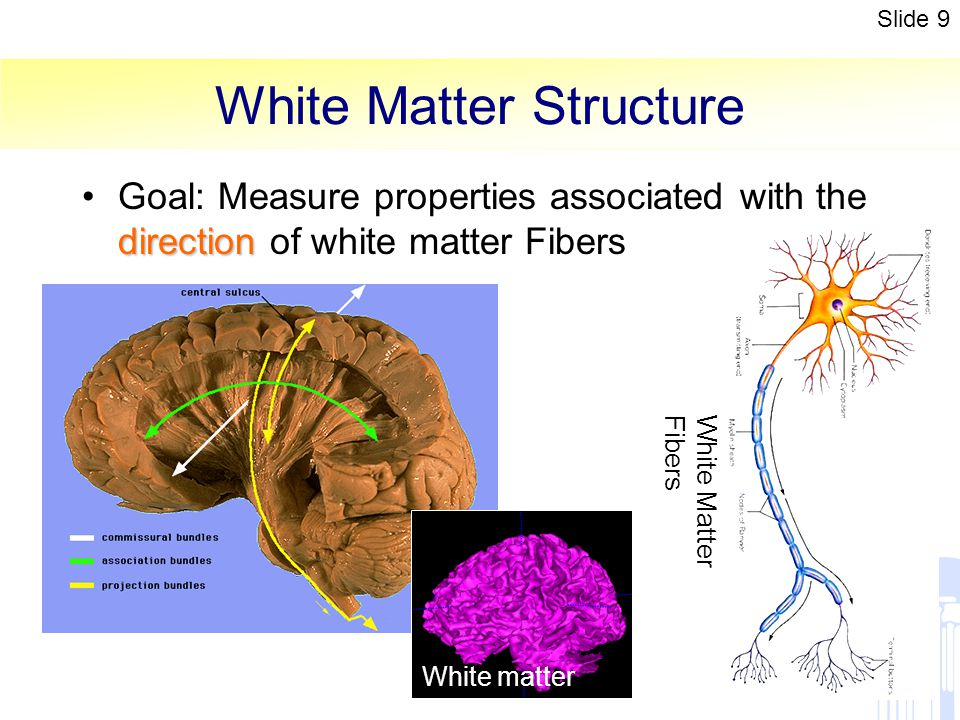 White Matter Structure