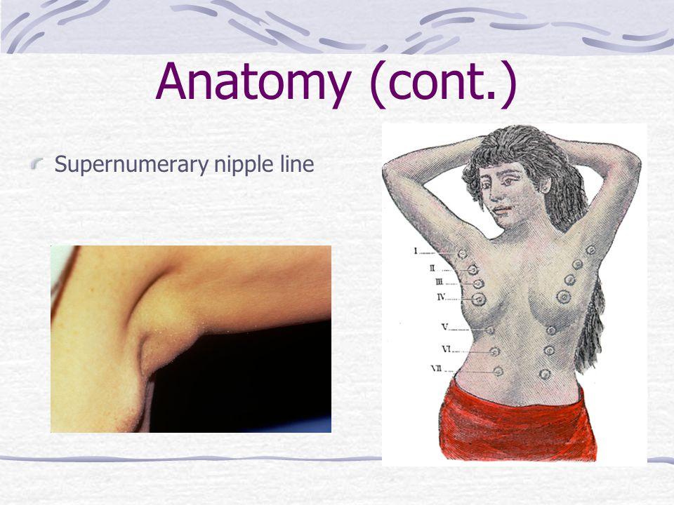 Anatomy (cont.) Supernumerary nipple line