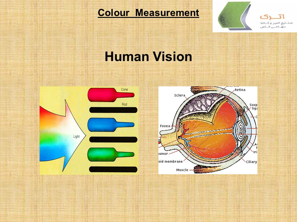 Colour Measurement Human Vision