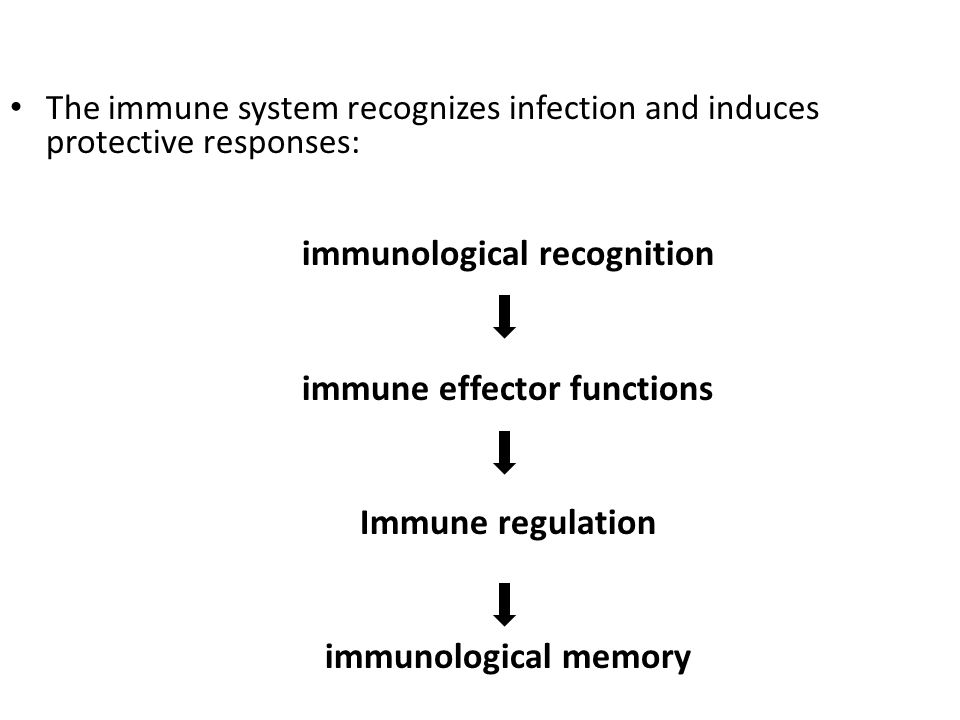 immunological recognition immune effector functions