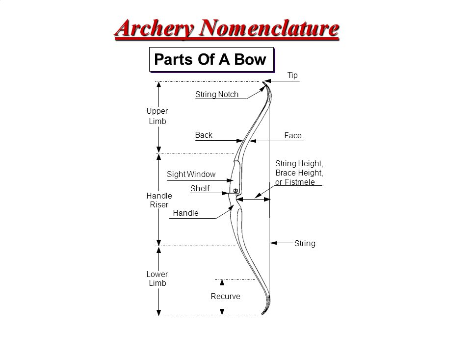 Archery Nomenclature Parts Of A Bow Tip String Notch Upper Limb Back