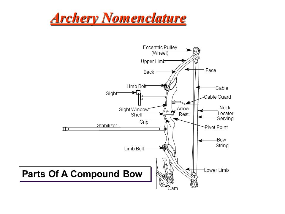 Archery Nomenclature Parts Of A Compound Bow Eccentric Pulley (Wheel)