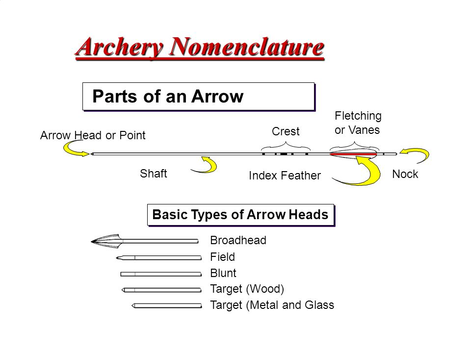 Archery Nomenclature Parts of an Arrow Basic Types of Arrow Heads