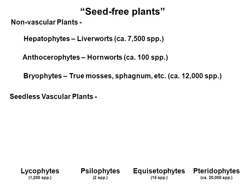 Seed-free plants Non-vascular Plants -
